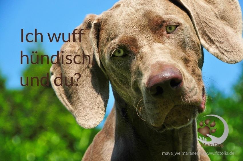 hundetraining hundetraining umgang mensch hund mein dog. Black Bedroom Furniture Sets. Home Design Ideas